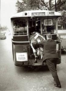 Une passagere d exception dans un bus mythique